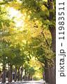 銀杏並木 銀杏 並木の写真 11983511