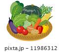 笊 食材 野菜のイラスト 11986312