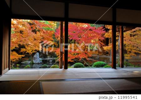 京都蓮花寺の庭園風景 11995541