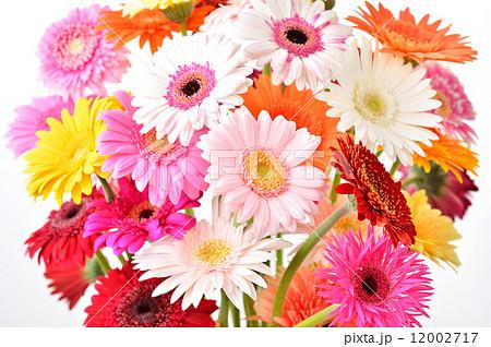 綺麗な花ガーベラのフラワーアレンジメント。 12002717