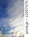 空 青空 秋の空の写真 12007470