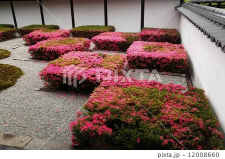 6月初夏 東福寺方丈の西庭 12008660