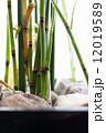 竹 青竹 京都 緑色 和 初夏 植物 真夏 12019589