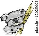コアラ イラスト 挿絵のイラスト 12025003