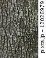クヌギ 木肌 樹皮の写真 12026979