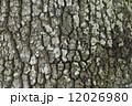 木肌 クヌギ 樹皮の写真 12026980