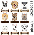 犬 動物 ベクターのイラスト 12029045