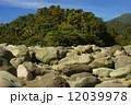 岳 森林 石の写真 12039978