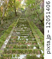 参道 苔 階段の写真 12051406