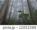 御岳山 山 霧の写真 12052388