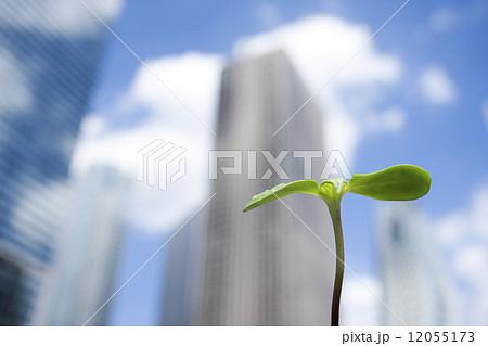 高層ビルとヒマワリの芽 12055173