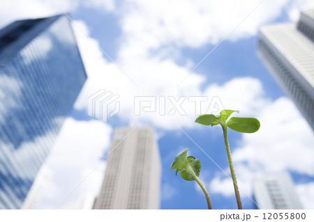 高層ビルとヒマワリの芽 12055800