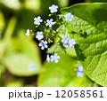 葉 芽 蕾の写真 12058561