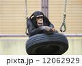 猿 動物 陸上動物の写真 12062929