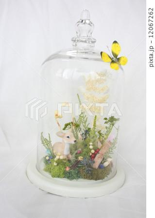 バンビアレンジ ガラスドームの写真素材 [12067262] - PIXTA