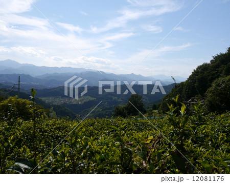茶畑と山並み 12081176