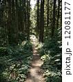 山道 登山道 ハイキングコースの写真 12081177
