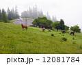 馬 まきば 牧草地の写真 12081784