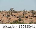 サイ さい 犀の写真 12086041