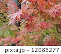 法多山の紅葉 12086277