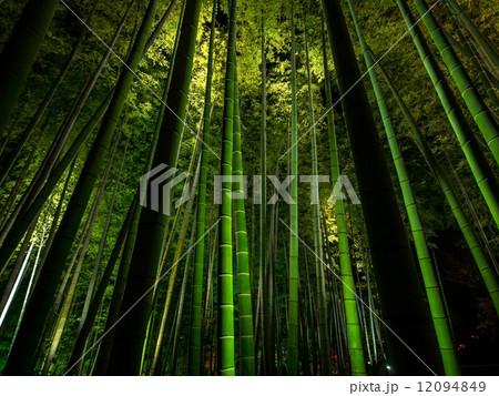 高台寺の竹林ライトアップ 12094849