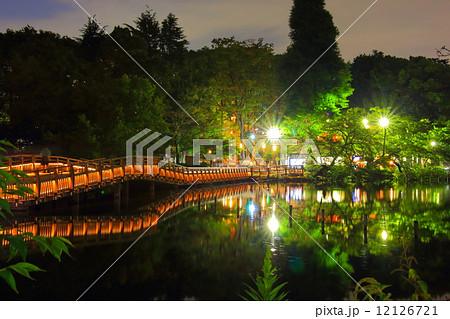 井の頭公園の夜 12126721
