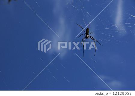 空と蜘蛛 12129055