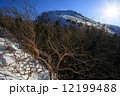 北八ヶ岳・中山峠付近から逆光の天狗岳 12199488