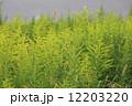 江戸川 土手 雑草の写真 12203220
