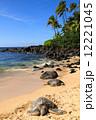 ウミガメの楽園 12221045