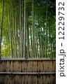 京都 京都市 日本の写真 12229732