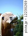 馬 12230269
