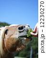 馬 12230270