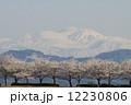 白山と桜 12230806