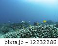 海底 小魚 サンゴの写真 12232286