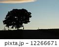 シルエット 夕暮れ 大木の写真 12266671