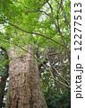 森林 12277513