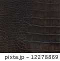 crocodile leather texture 12278869