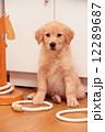 かわいい子犬 12289687