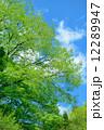 初夏の雑木林 12289947