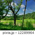 小湊鉄道 12289964