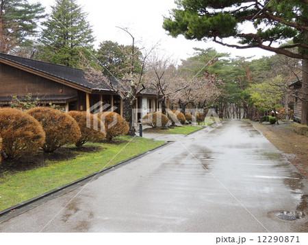 日本庭園の桜 12290871