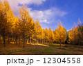 カラ松 信州カラ松 秋の写真 12304558