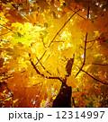 すごい バックグラウンド 背景の写真 12314997