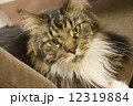 猫カフェにて 12319884