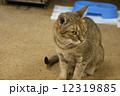 猫カフェにて 12319885