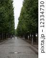 並木道 並木 木の写真 12334730