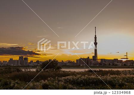 荒川河川敷のススキと東京スカイツリー 12334968