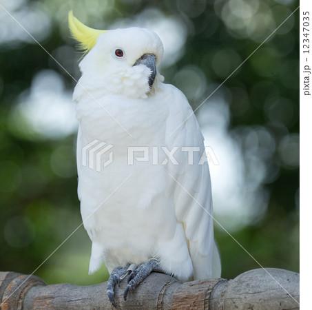 parrotの写真素材 [12347035] - PIXTA