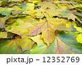 秋 群れ 背景の写真 12352769